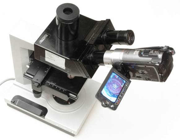 Canon HF200 video camera with 30mm eyetube adapter in use on a microscope binocular
